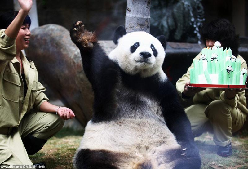 大熊猫 动物 800