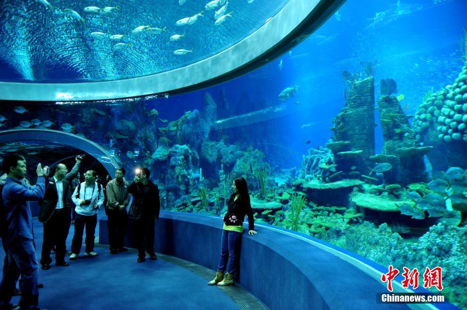 全球最大的海洋动物