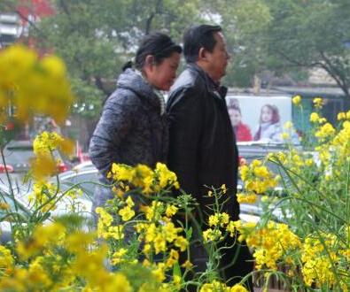 湖北/湖北一商场将油菜花种到门口吸引顾客