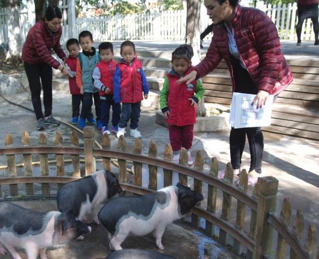北京一某幼儿园建动物园